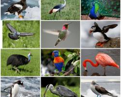 Перелетные птицы карелии
