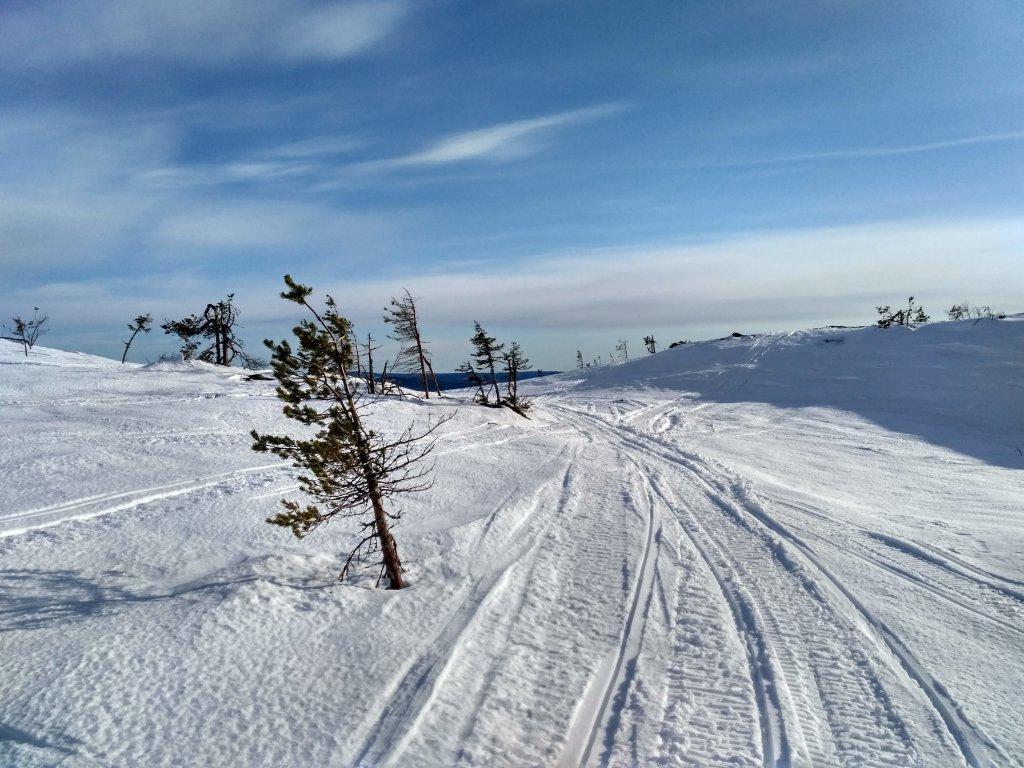 paanayrvi-zimoy